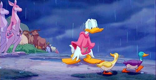 noah and ducks