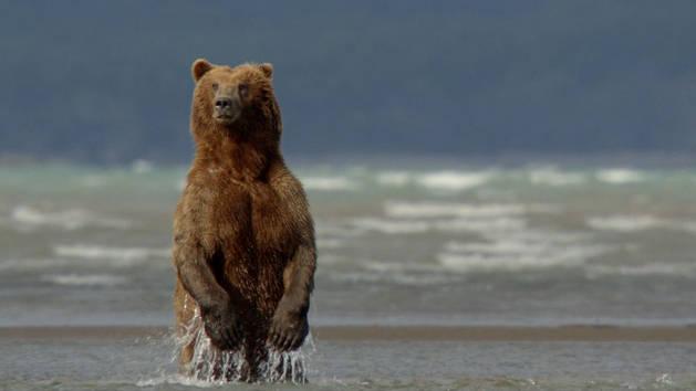 bears10