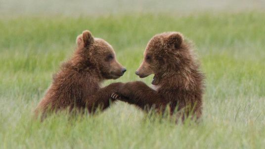 bears4